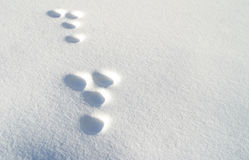 Rabbit footprints in snow stock photos