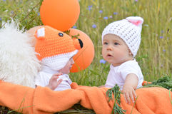 Rabbit fox baby Royalty Free Stock Photo
