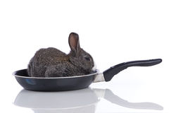 Rabbit in a frying pan Stock Image