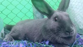 Rabbit full color. Rainbow royalty free stock photos