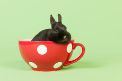 Rabbit in funny big cup Royalty Free Stock Images