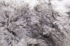 Rabbit fur Royalty Free Stock Photo
