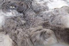Rabbit fur Royalty Free Stock Photos
