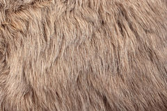 Rabbit fur Royalty Free Stock Photo