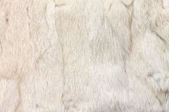 Rabbit fur background. Texture of rabbit fur. The fur is painted in beige color. Natural fur Royalty Free Stock Photos