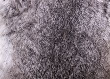 Rabbit fur close up grey texture background material stock photography