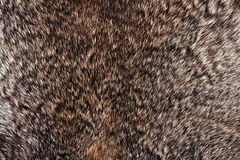 Rabbit fur texture Stock Photos