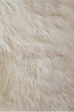 Rabbit fur texture. Stock Photos