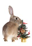 Rabbit with a fur-tree Royalty Free Stock Images