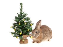 Rabbit with a fur-tree. Stock Photography