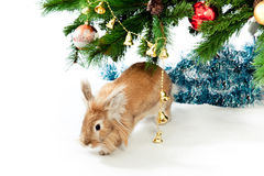 Rabbit with a fur-tree. Stock Photos