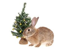 Rabbit with a fur-tree, isolated. Stock Photo