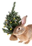 Rabbit with a fur-tree, isolated. Stock Photos