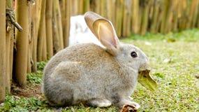 Rabbit in a garden Stock Image