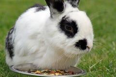 Rabbit in the garden Stock Images