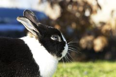 A rabbit Royalty Free Stock Photography