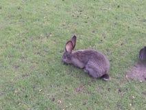 Rabbit. Garden grass eat ear Royalty Free Stock Image