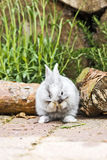 Rabbit in the garden Stock Image