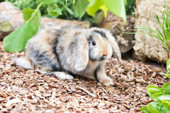Rabbit in the garden Royalty Free Stock Photos