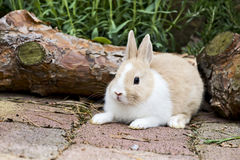 Rabbit in the garden Stock Photography