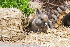 Rabbit in the garden Royalty Free Stock Images