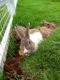 Rabbit in garden stock photo