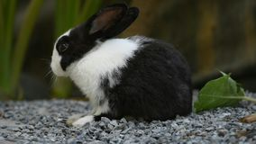 Rabbit in the garden. Small bunny , lovely pet at home
