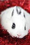 Rabbit with  garland Stock Photography
