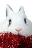 Rabbit with  garland. Small beautiful rabbit with  red  garland  isolated Royalty Free Stock Photography