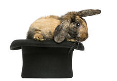 Rabbit getting out of a top hat. In front of a white background Stock Photo