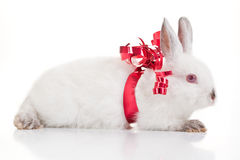 Rabbit Gift Stock Image