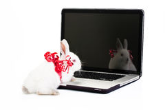 Rabbit Gift Royalty Free Stock Photography