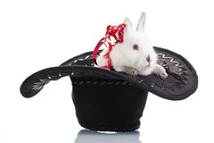 Rabbit Gift Royalty Free Stock Photos