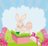 Rabbit in gift box, easter surprise present Royalty Free Stock Image