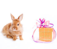 Rabbit  and a gift box Royalty Free Stock Photos