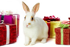 Rabbit and gifts Stock Image
