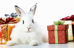 Rabbit and gifts Royalty Free Stock Photos