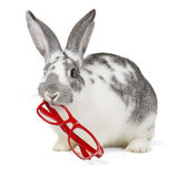 Rabbit with glasses Stock Photo