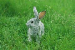 Rabbit in grass Stock Photo