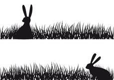 Rabbit in grass,  Stock Photos