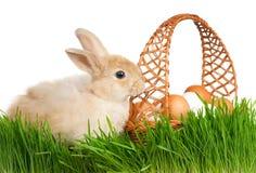 Rabbit in grass Royalty Free Stock Photos
