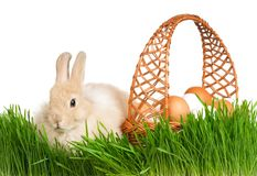 Rabbit in grass Stock Images
