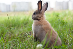 Rabbit in grass. royalty free stock photos