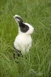 Rabbit in the grass Stock Image