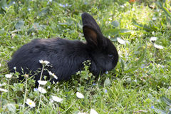 Rabbit on grass Royalty Free Stock Image