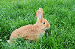 Rabbit in grass Stock Photos