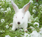 Rabbit on the grass Stock Image
