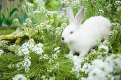 Rabbit on the grass Stock Photos