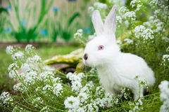 Rabbit on the grass Royalty Free Stock Photo