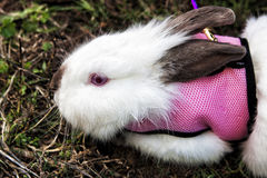 Rabbit on the grass. Bunny white. Stock Image